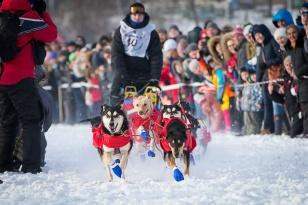 На «Зимниаде» состоятся гонки на собачьих упряжках