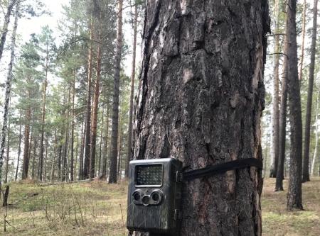 В Иркутске в городских лесах устанавливают приборы видео- и фотофиксации