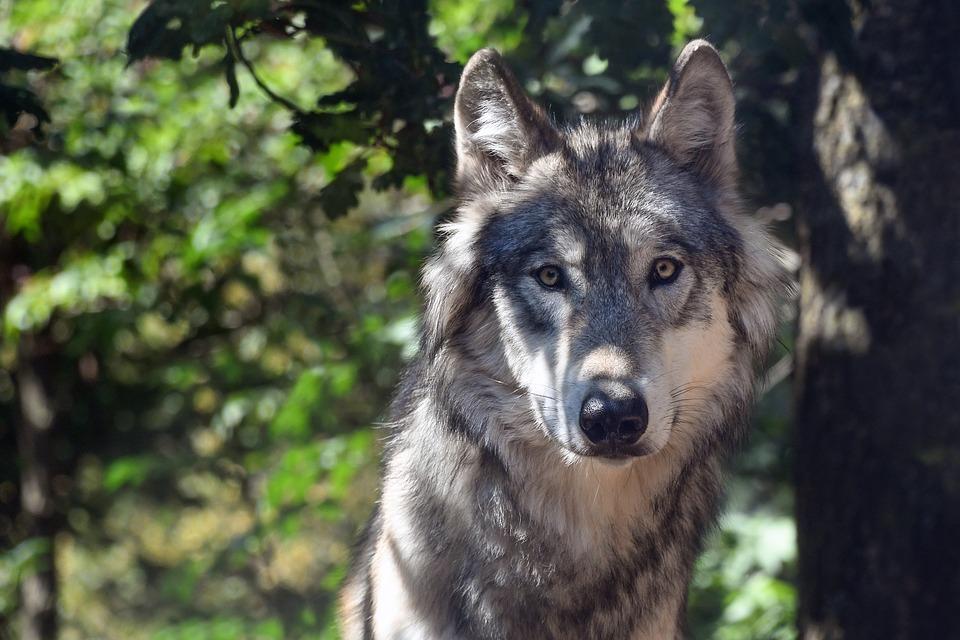 17 августа в Иркутской области открывается сезон охоты