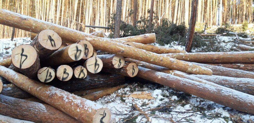 На севере Иркутской области полицейские пресекли незаконную рубку леса