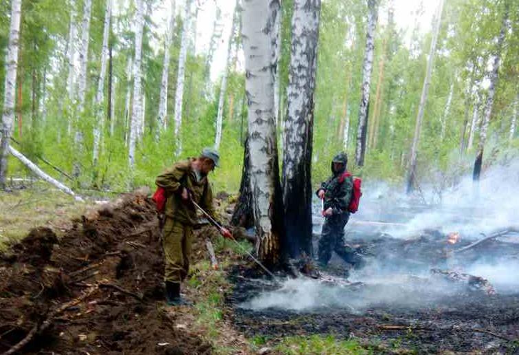 В Иркутской области растет площадь лесных пожаров